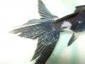 Poisson-rouge-Ich-vetofish.jpg