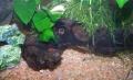 Crevettes5.JPG